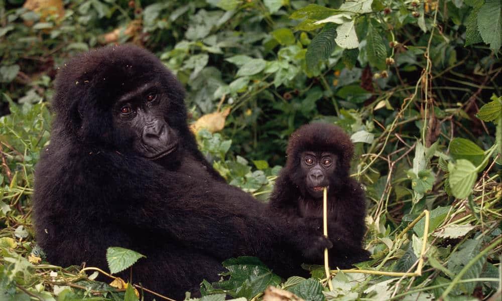 Congo_World Wildlife Fund