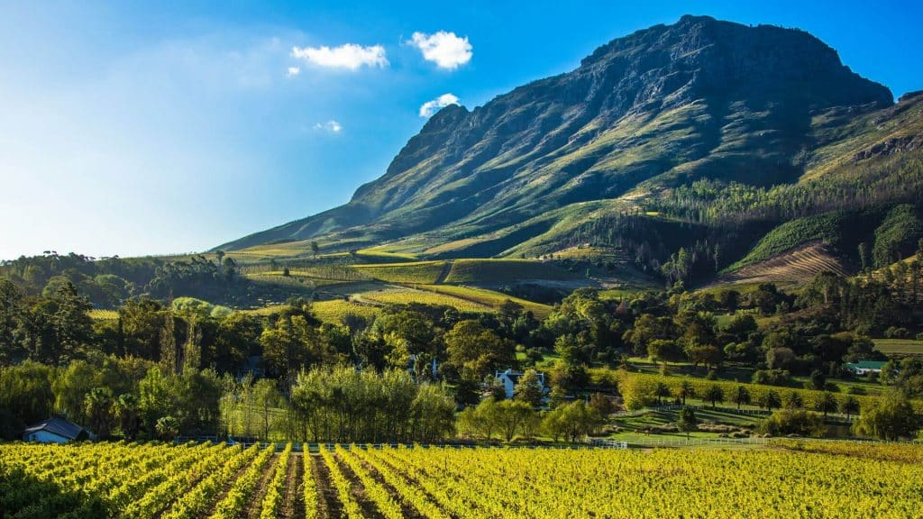 Cape Winelands_andBeyond