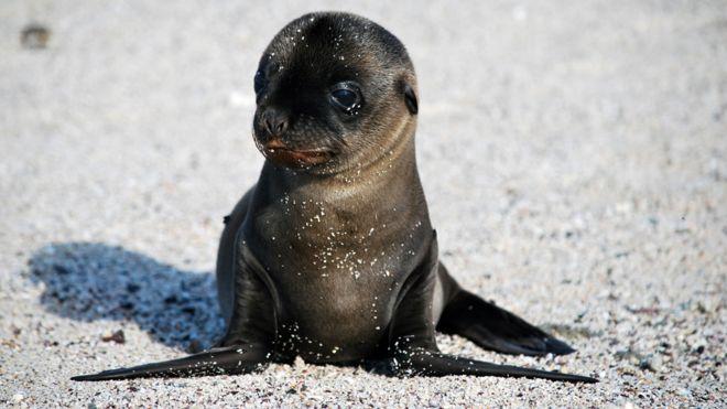 Galapagos Islands_BBC
