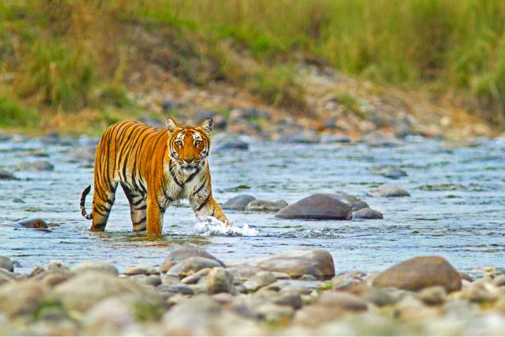 Jim Corbett National Park India_Holidify
